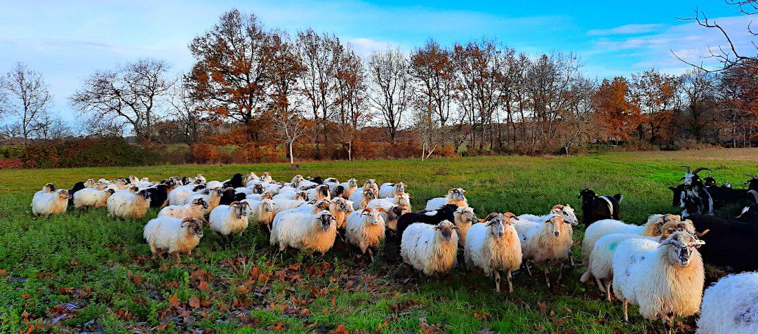 La l'Uby des Moutons